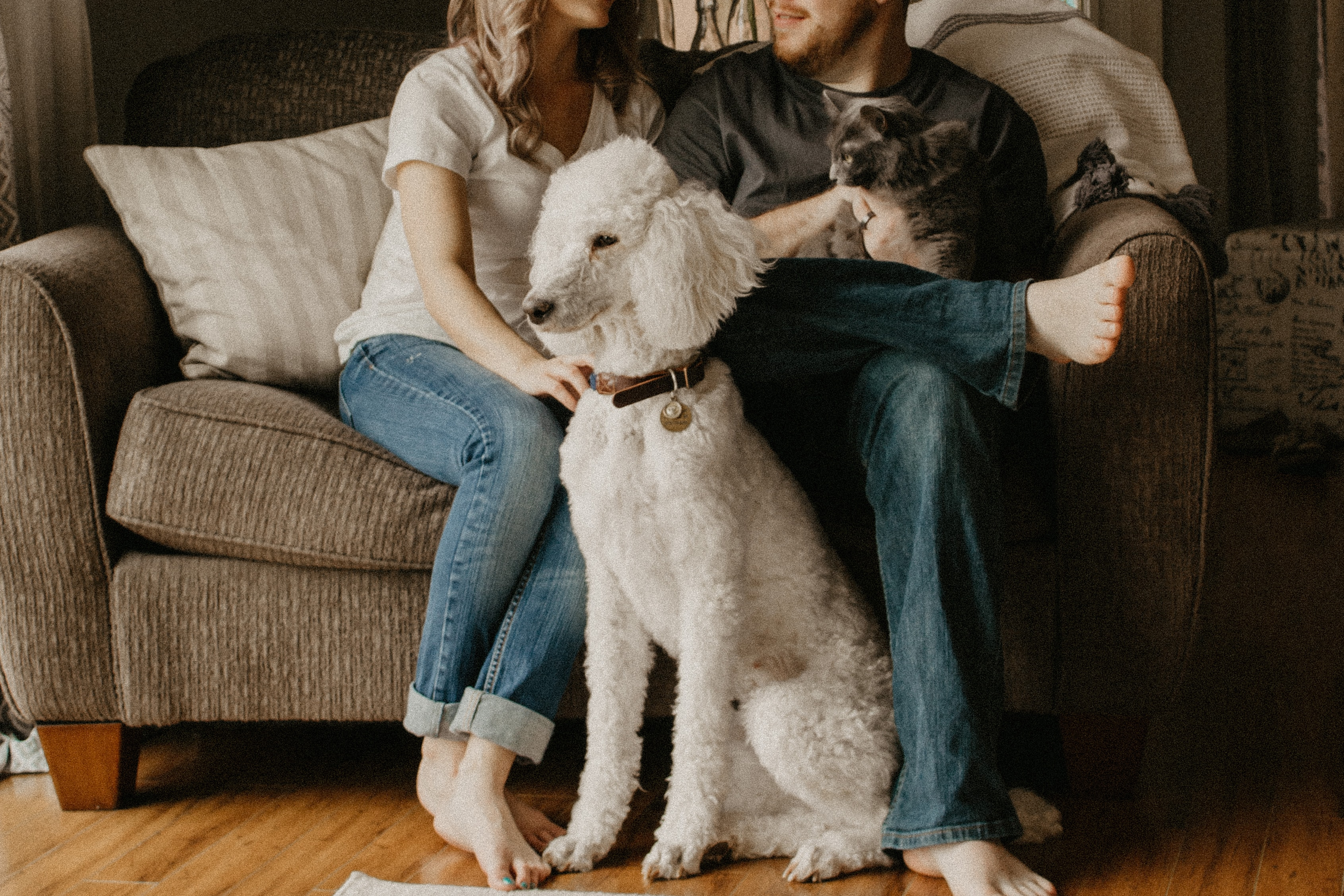 pets in rental home